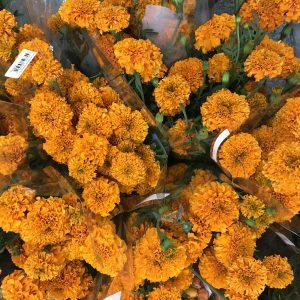 Marigold Orange